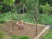 wilson sniffing garden